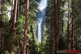 Lower Yosemite fall and forest, Yosemite NP, USA