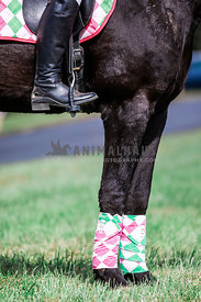 close up of matching polo wraps and saddle pad