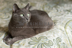 A grey housecat looking to the side while laying on a bed cover