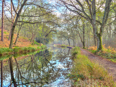 Canal through forest in countryside
