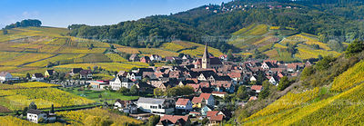 Niedermorschwih, Alsatian vineyards, Alsace, France, Europe, Autumn, Mountain,
