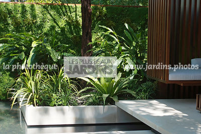 Exotic garden, Tropical garden, Fern, Foliage wall, Green wall, Vegetation wall