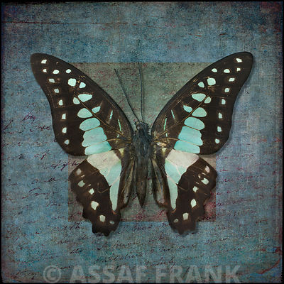 Colorful tropical Butterfly with vintage effects