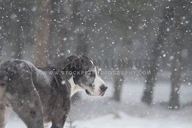 Dog with big snowflakes in nature