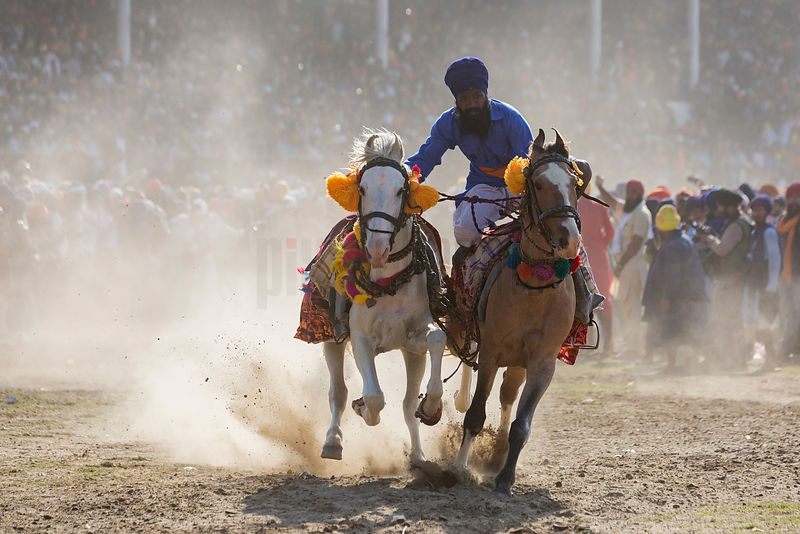 A Nihang Sikh Warrior Shows his Riding Skills During the Horse Games at the Annual Holla Mohalla