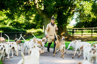 Taunton Vale Foxhounds