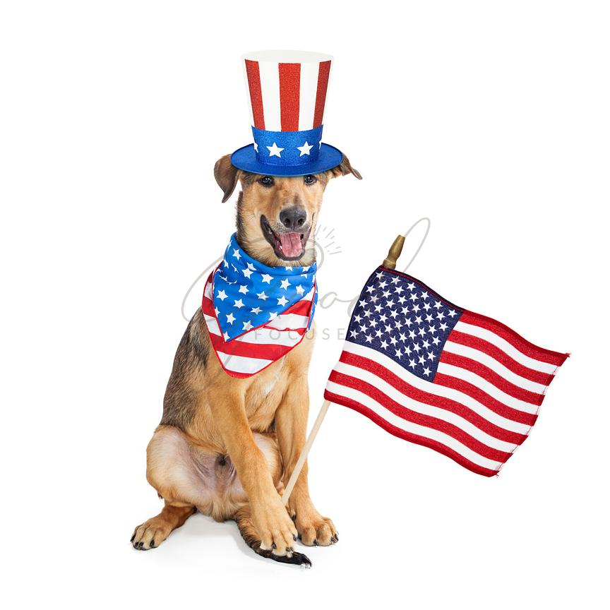 Funny American Patriotic Dog With Flag