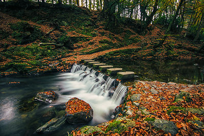 Tollymore_stepping_stones