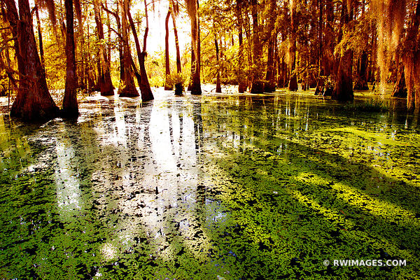 LAKE MARTIN ATCHAFALAYA BASIN LOUISIANA SWAMP AMERICAN SOUTH LANDSCAPE