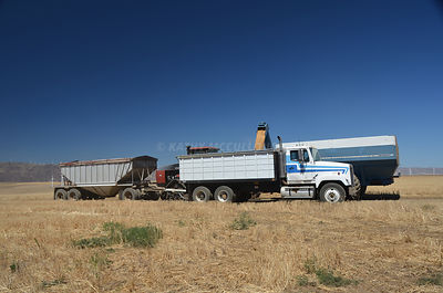 Wheat pouring into the truck