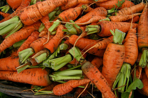 Bunches of heirloom carrots