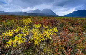 Yellow and Red | Denali Highway, AK