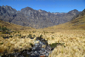 Stream and high altitude puna grassland in the Choquetanga Valley, Cotapata National Park, Bolivia