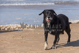 Happy friendly wet black dog on the beach