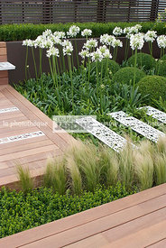 Agapanthus, Contemporary garden, Perennial, Perennial rhizome, White, Contemporary Terrace, Wooden Terrace, Digital, Grasses
