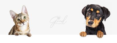 Cute kitten and puppy dog together hanging over blank web banner