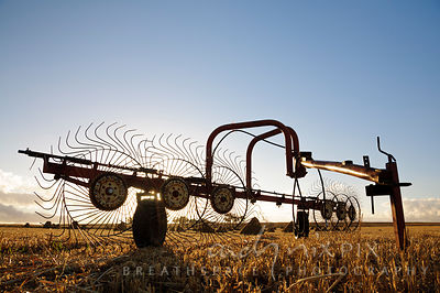 Wheat thresher in a field with hay bales stacked in background