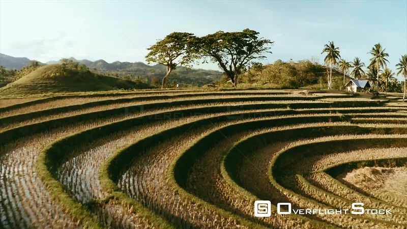 Terraced Rice Paddy Philippines Asia