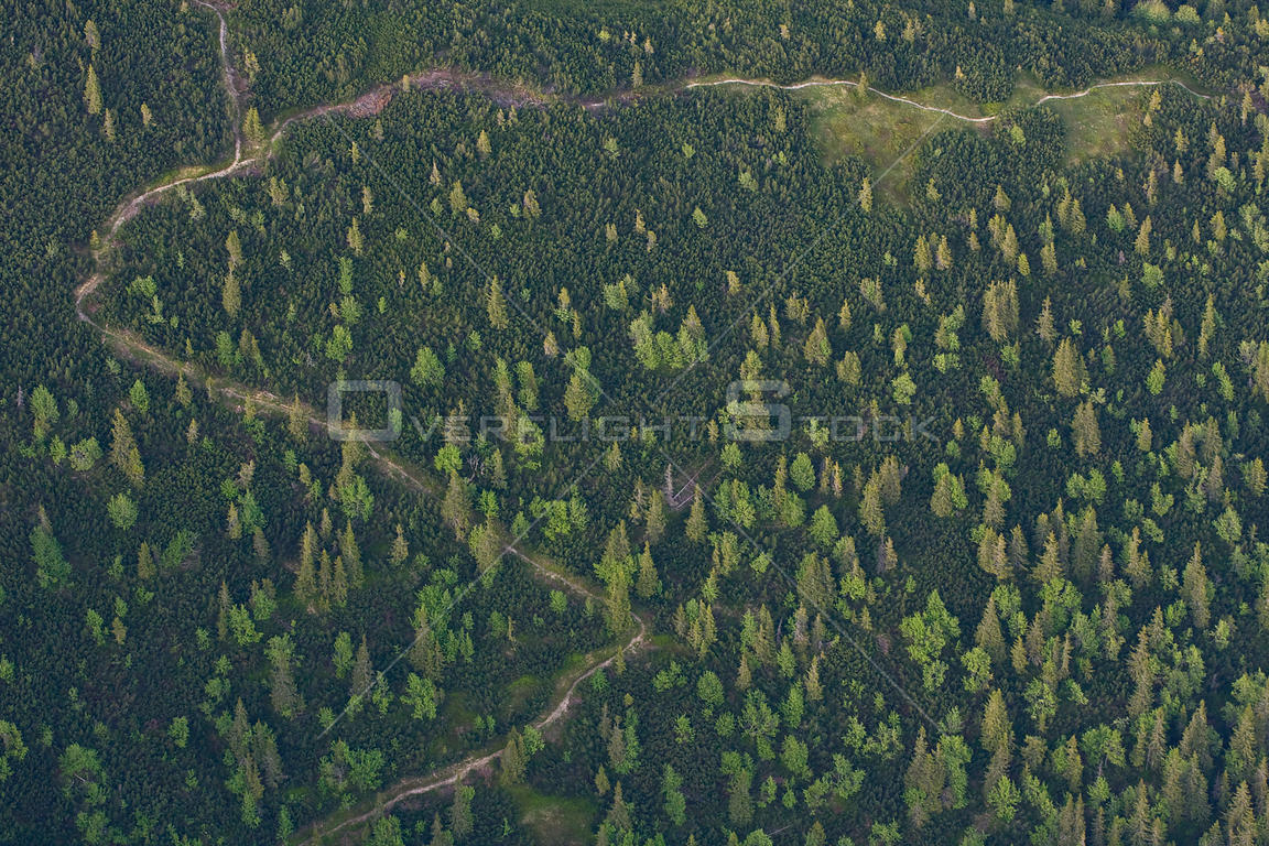 Aerial view of path in mountain forest of Norway spruce (Picea abies) Mountain ash / Rowan (Sorbus aucuparia) and the Dwarf m...