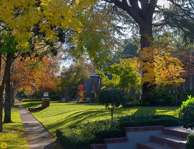 Fall Collors in Midtown Sacramento #3