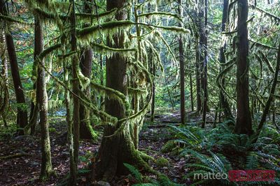 Rainforest, Vancouver, British Columbia, Canada