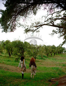 Apple Orchard Story