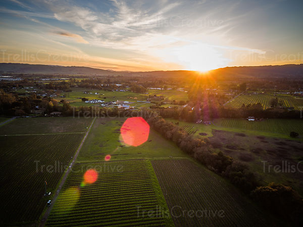 Aerial view of vineyard landscape at sunset