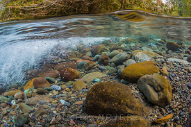 Underwater View of Dungeness River in Olympic National Forest