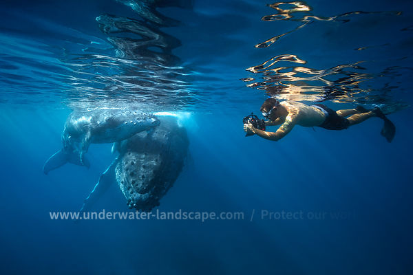 Take a photo with a Humpback whale