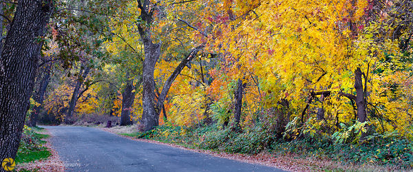Fall Colors in Bidwell Park, Chico #4