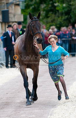 First Inspection (Trot Up)