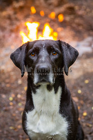 dog with a crown of fire from campfire behind