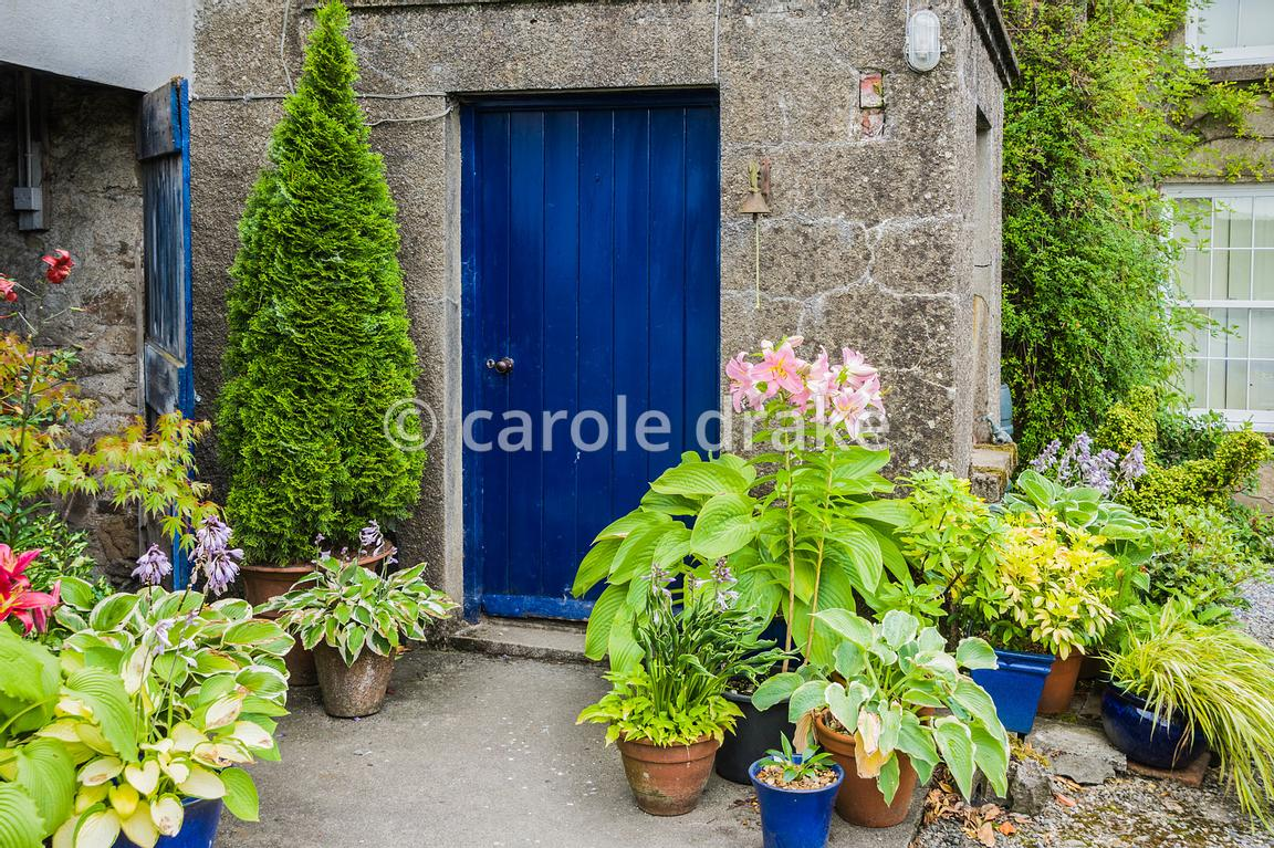 Carole Drake Blue Front Door Surrounded By Pots Of Hostas Lilies