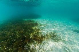 Seagrass Beds in Dry Tortugas National Park