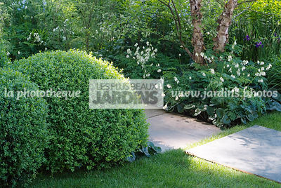 Ball shaped, Buxus, Contemporary garden, Pavement, Perennial, Sphere shaped, Topiary, Common Box,
