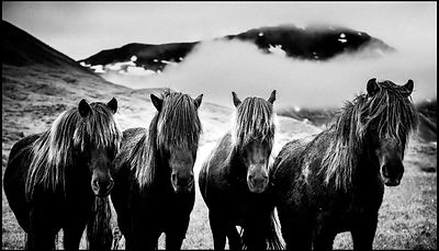 Four wild horses in the Icelandic plains, 2015 © Laurent Baheux