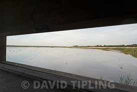 View across the scrape from hide at Tiitchwell RSPB Reserve with Avocets North Norfolk summer