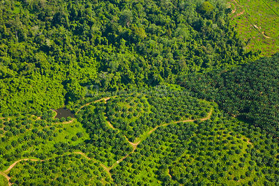 Aerial view of palm oil plantations in deforested area, Rio Sungai Kinabatangan, Sabah, Borneo, Malaysia. 2007