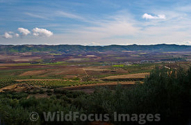 View of the fertile plains around Dougga; Tunisia; Landscape