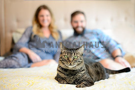 tabby cat on bed with owners