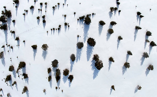Aerial view of forest with pine and spruce, at the tree limit on mountain, Golsfjellet mountain plateau, Norway, March.
