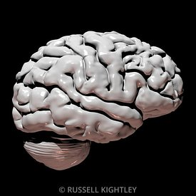 Human Brain: Grey on Black