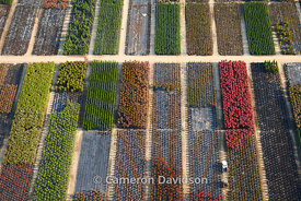Aerial photograph of rows of plants in a garden/greenhosue near Suffolk, Virginia.