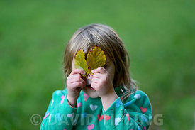 Young girl playing peek a boo with leaves in woodland Norfolk autumn