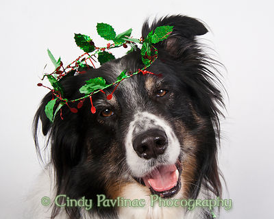 Holly Crown Holiday Merlin
