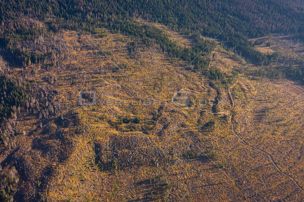 Extensive clear-cut area at the foothills of the Tatras, seen from the air. Western Tatras, Slovakia, September 2008.