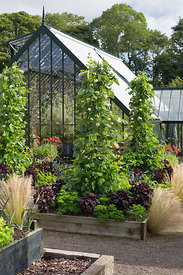 Raised vegetable beds and grasses by greenhouse; Stipa tenuissima self seeds into gravel