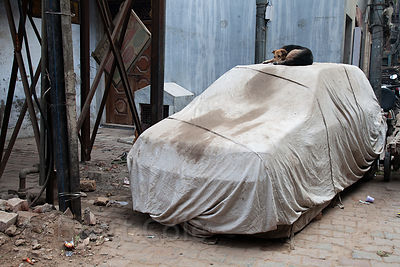 Dog sleeping on a covered car in the Paharganj area of Delhi, India