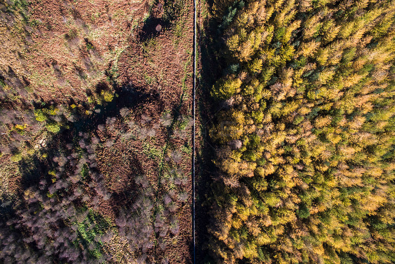 Aerial view of fence dividing regenerating Birch woodland from plantation woodland. Part of Carrifran Wildwood, a replanting ...