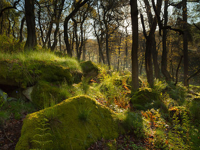Morning dew in Padley Wood